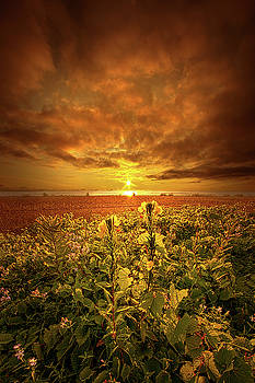 In Remembrance by Phil Koch
