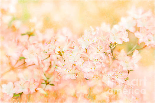 In the Arms of Spring by Marilyn Cornwell
