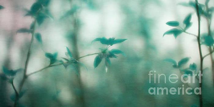 In the deep forest 4 by Priska Wettstein