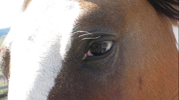 In the Eye of the Sky Horse by Brandy Woods