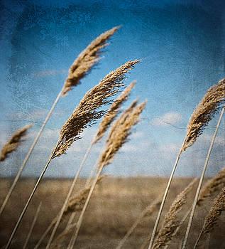In the field by Michel Filion