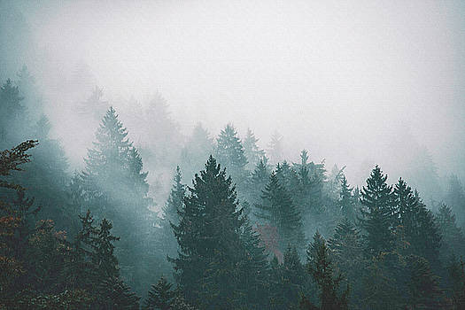 In the Fog by Emma Lucas