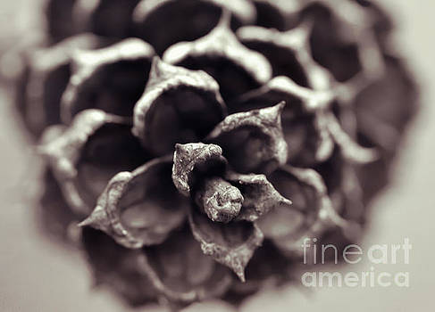 In The Forest Art Series - Pine Cone Macro by Kerri Farley