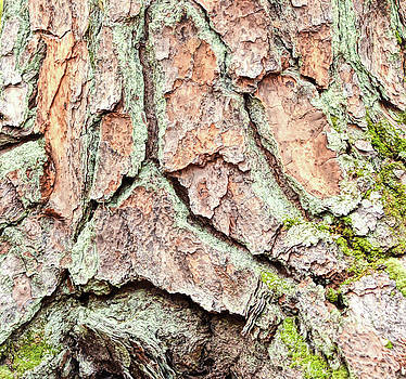 In The Forest Art Series - Tree Bark Patterns 2  by Kerri Farley