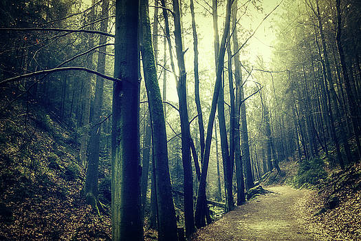 In The Forest Dark And Shaded by Dorit Fuhg