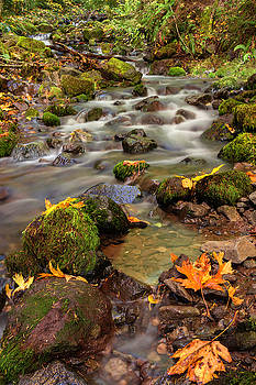 In the forest in Fall by Hans Franchesco