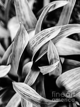 Ismo Raisanen - In the Garden _ Tulip Leaves