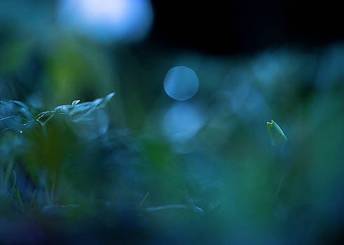 In the Gloaming by Sarah-fiona Helme