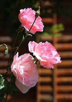 Rosanne Jordan - In the Pink Roses