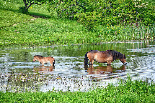 In the puddle 1 by Ingrid Dendievel
