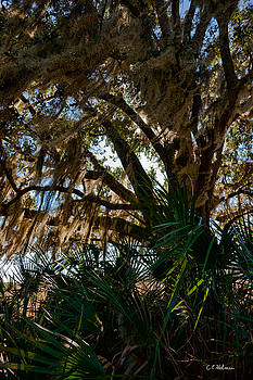 Christopher Holmes - In The Shade Of A Florida Oak