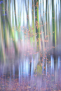 Jenny Rainbow - In the Spring Woods. Impressionism