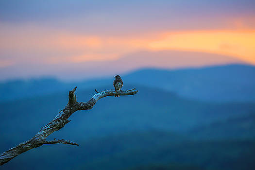In the Stillness by Jim Neal