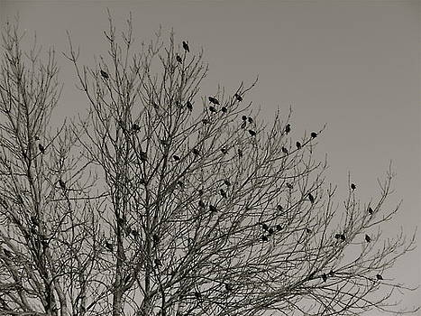 In The Tree Tops by Victoria Serrano