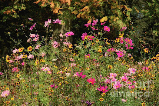 In the wild flower meadow. by Andy Bradley