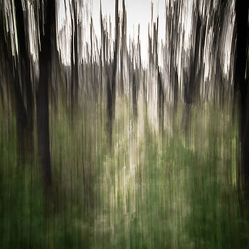 In the Woods by Cynthia Traun