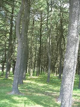 In the woods by Deborah Finley