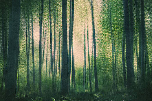 In the woods by Violet Gray