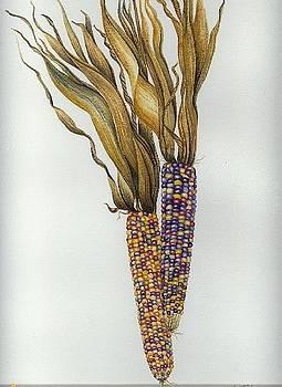 Indian corn by Elizabeth H Tudor