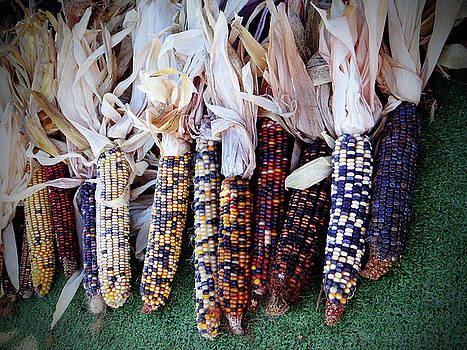 Indian Corn by Jamie Johnson