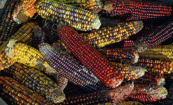 Indian Corn by Joanne Coyle