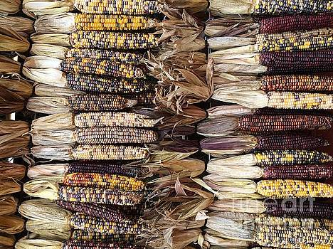 Indian Corn by Robin Maria Pedrero