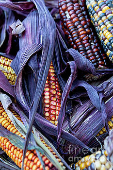 Indian Corn by Sharon Foelz