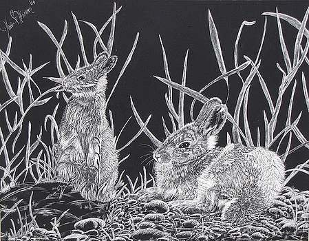 Indian Ink Rabbits by Kevin F Heuman