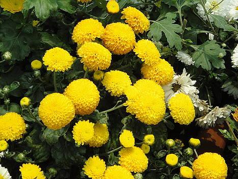 Usha Shantharam - Indian Mums - Yellow Chaamanthi