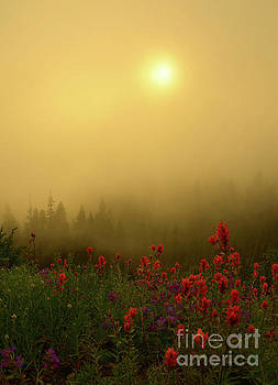Mike Dawson - Indian Paintbrush Dawning
