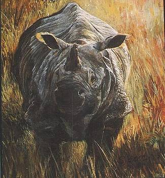 Indian Rhino by Steve Greco