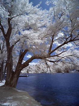 The Infrared Trees of Sturbridge, Massachusetts by Linda Ouellette