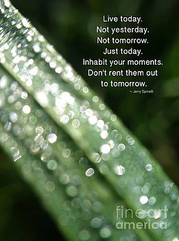 Inhabit Your Moments by Kerri Farley