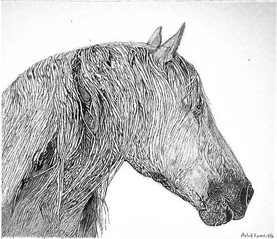 Ink pen Drawing of a Horse by Ashok Naraian