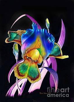 Inner Glow by David Neace
