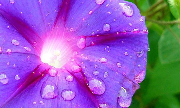 Inner Glow by Susan Olga Linville