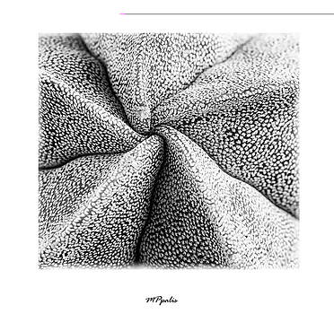 Inner plant details by Michalakis Ppalis