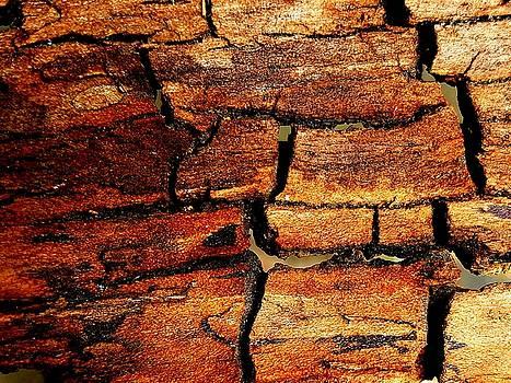 Colin Drysdale - Inner Tree Bark