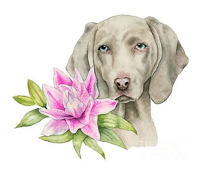 Innocence - Weimaraner and Lily Watercolor Painting by NamiBear