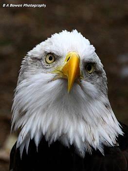Barbara Bowen - Inquisitive Eagle