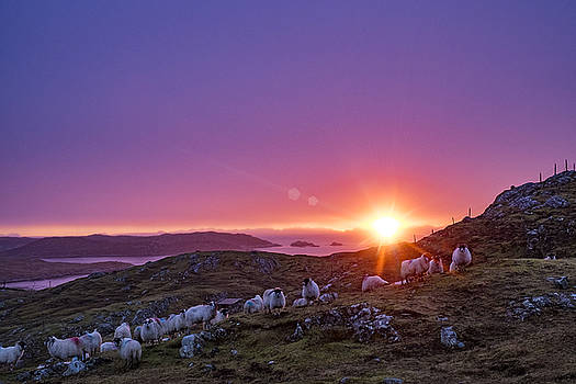 Inquisitive flock at dawn, Harris by Neil Alexander