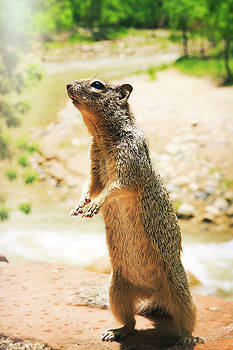 Inquisitive Squirrel by Natalie Rotman Cote