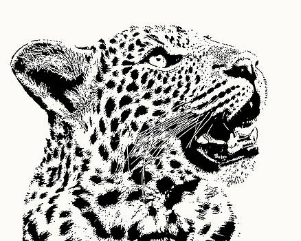 Inquisitive Young Leopard Looking Up by Scotch Macaskill