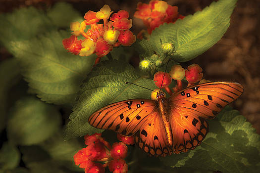 Mike Savad - Insect - Butterfly - Heliconius