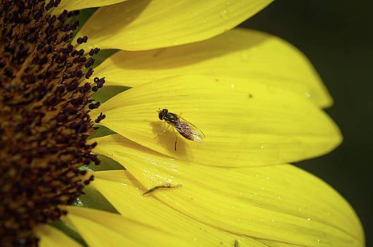 A Bug's Life by Nikki McInnes