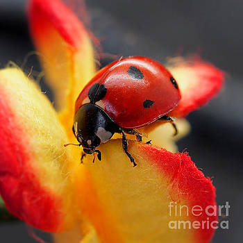 Insect ladybug on a paper flower by Nika Lerman