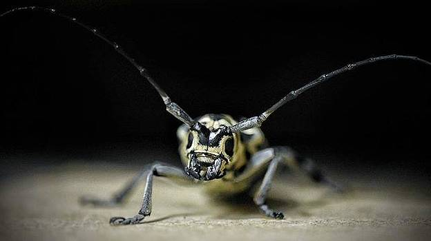 insects[,] All Business All The by Drew Hutto