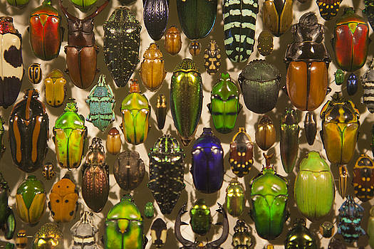 Insects by Koepp Photography
