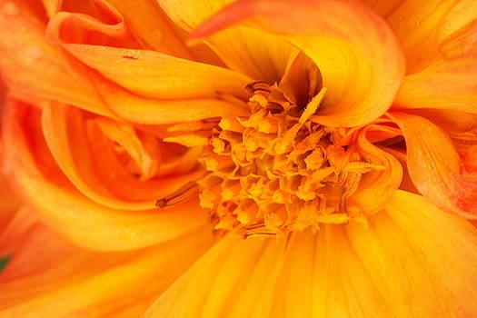 Inside a flower by Amanda Kiplinger