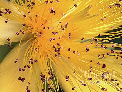 Inside a flower - Favorite of the bees by Eva-Maria Di Bella